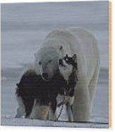 A Polar Bear Ursus Maritimus Wood Print