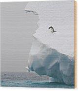 Adelie Penguin Pygoscelis Adeliae Wood Print
