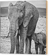 African Elephants In The Masai Mara Wood Print