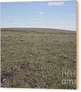 Alpine Tundra Wood Print