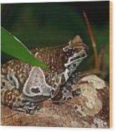 Amazon Milk Frog Wood Print