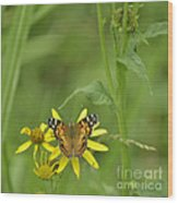 American Painted Lady Wood Print