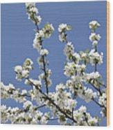 Apple Trees In Full Bloom Wood Print by Wilfried Krecichwost