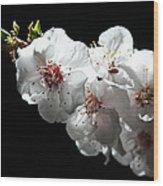 Apricot Flowers At Night Wood Print