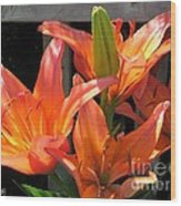 Asiatic Lily Named Gran Paradiso Wood Print