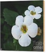 Bacopa Named Snowtopia Wood Print