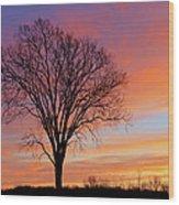 Bare Trees At Dawn Wood Print