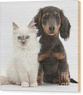Blue-point Kitten & Dachshund Wood Print by Mark Taylor