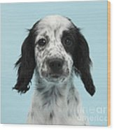 Border Collie X Cocker Spaniel Puppy Wood Print