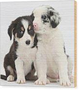 Boreder Collie Puppies Wood Print