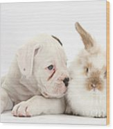 Boxer Puppy And Young Fluffy Rabbit Wood Print