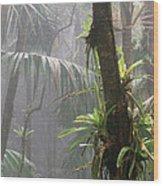 Bromeliads El Yunque National Forest Wood Print by Thomas R Fletcher