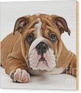 Bulldog Puppy Wood Print