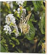 Butterfly On Blooming Flowers Wood Print