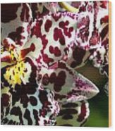 C Ribet Orchids Wood Print