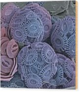 Calcareous Phytoplankton, Sem Wood Print