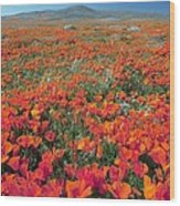 Californian Poppies (eschscholzia) Wood Print