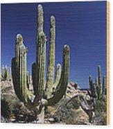 Cardon Pachycereus Pringlei Cacti Wood Print