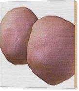 2-cell Embryo Embryo, Artwork Wood Print