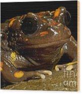 Chilean Mountains False Toad Wood Print