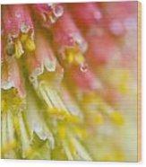 Close Up Of Flower Stamen Wood Print