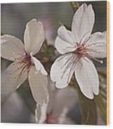 Close View Of Cherry Blossoms Wood Print