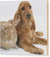 Cocker Spaniel And Rabbit Wood Print