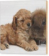 Cockerpoo Puppy And Rabbit Wood Print