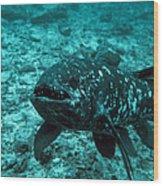 Coelacanth Fish Wood Print