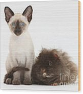 Colorpoint Rabbit And Siamese Kitten Wood Print