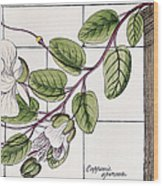 Colosseum: Flower Wood Print