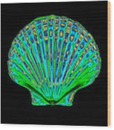 Coloured X-ray Of A Pecten Scallop Shell Wood Print