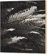 Common Polypody Wood Print