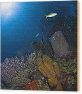 Coral And Sponge Reef, Belize Wood Print