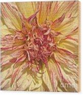 Dahlia Named Misty Explosion Wood Print
