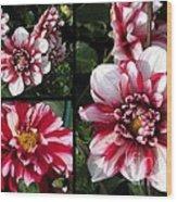 Dahlia Named Yoro Kobi Wood Print