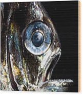Deep Sea Hatchetfish Wood Print
