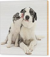 Dog And Puppy Wood Print