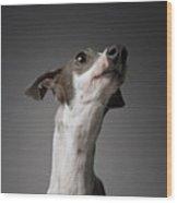 Dog Looking Away Wood Print