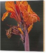 Dying Flower Wood Print