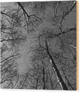 Epping Forest Trees Wood Print