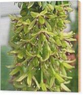 Eucomis Named Bicolor Wood Print
