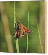 European Skipper  Wood Print