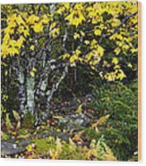 Fall Color Highland Scenic Highway Wood Print