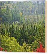 Fall Forest Rain Storm Wood Print