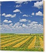 Farm Field At Harvest In Saskatchewan Wood Print by Elena Elisseeva