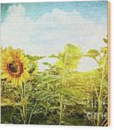 Field Of Colorful Sunflowers And Blue Sky  Wood Print