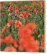 Field Of Poppies. Wood Print