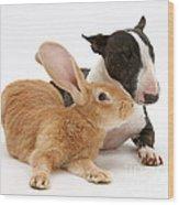 Flemish Giant Rabbit And Miniature Bull Wood Print