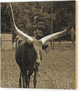 Florida Longhorn Wood Print